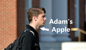 adams apple
